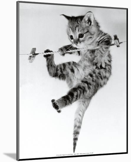 Kitten on a Clothes Line-Erik Parbst-Mounted Print