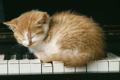 Kitten on Piano-Ginger--Photographic Print