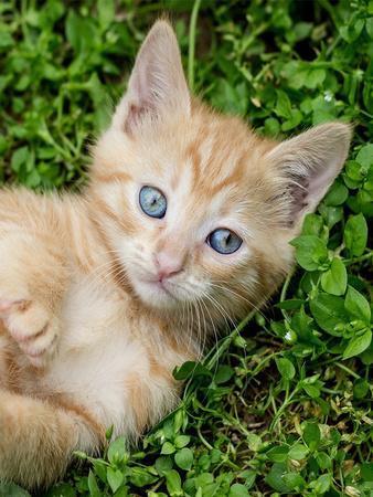 https://imgc.artprintimages.com/img/print/kitten-pet-cat-animal_u-l-f8qi3y0.jpg?p=0