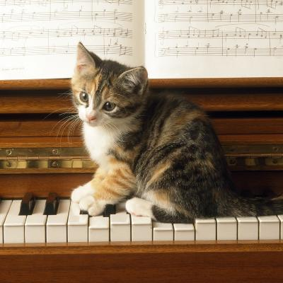 Kitten Playing on Piano--Photographic Print
