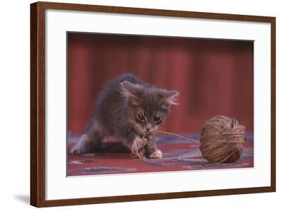Kitten Playing with Ball of String-DLILLC-Framed Photographic Print