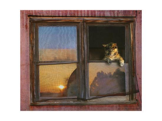 Kitten Window-Chris Vest-Art Print