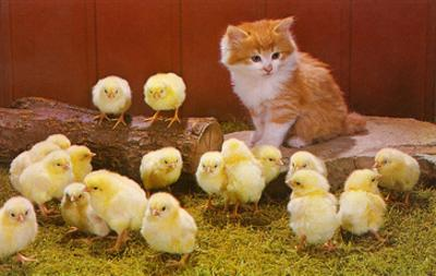 Kitten with Chicks