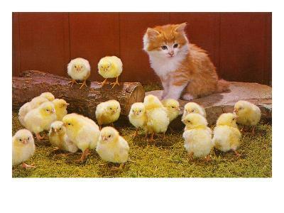 Kitten with Chicks--Art Print
