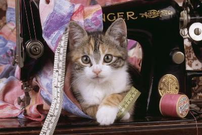 Kitten with Sewing Machine--Photographic Print
