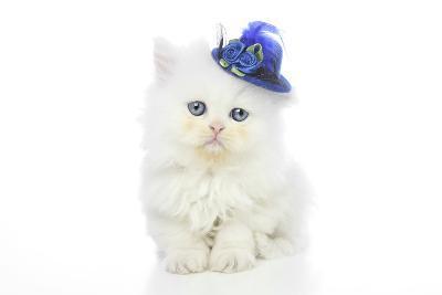 Kittens 005-Andrea Mascitti-Photographic Print