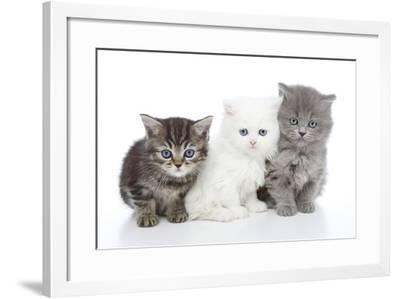 Kittens 006-Andrea Mascitti-Framed Photographic Print