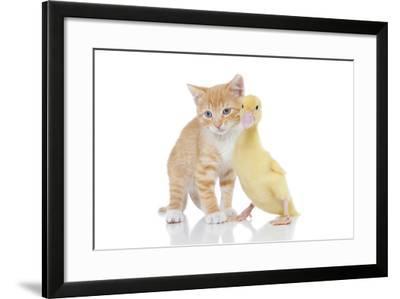 Kittens 018-Andrea Mascitti-Framed Photographic Print