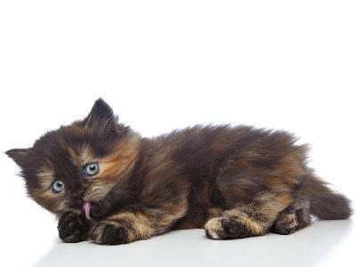 Kittens 030-Andrea Mascitti-Photographic Print