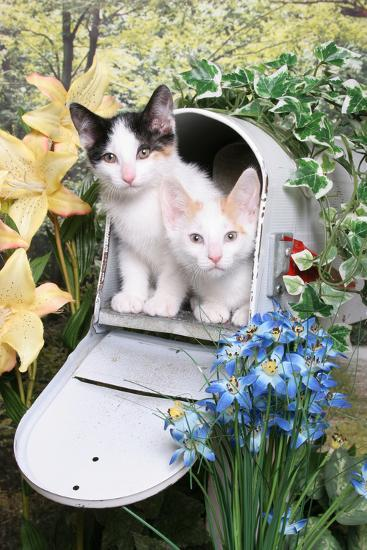 Kittens In A Mailbox-Blueiris-Photographic Print