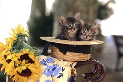 Kittens in Hat with Flowers--Photographic Print