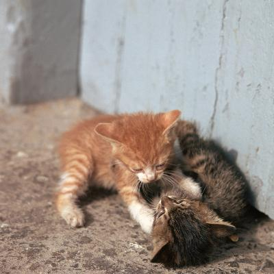 Kittens in Heracleion, Crete-CM Dixon-Photographic Print