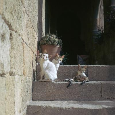 Kittens in Rhodes Old Town-CM Dixon-Photographic Print