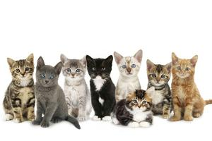 Kittens Line-Up