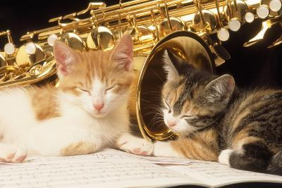 Kittens with Music and Saxophone--Photographic Print