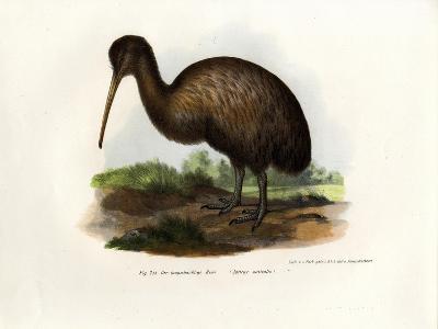 Kiwi, 1864--Giclee Print