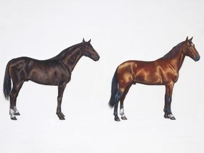 Kladruber Horse and Furioso-North Star Horse (Equus Caballus), Illustration--Photographic Print