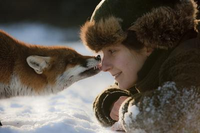 Red Fox (Vulpes Vulpes) Licking The Nose Of A Woman