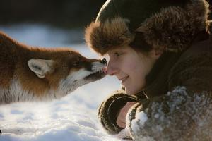 Red Fox (Vulpes Vulpes) Licking The Nose Of A Woman by Klaus Echle