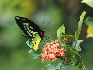 Butterfly Perched on a Flower and Sipping Nectar by Klaus Nigge