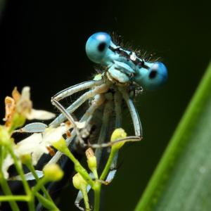 Blue Dragonfly On A Flower - Funny Portrait by Kletr