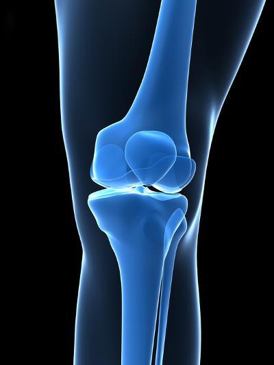 Knee Bones, Artwork-SCIEPRO-Photographic Print