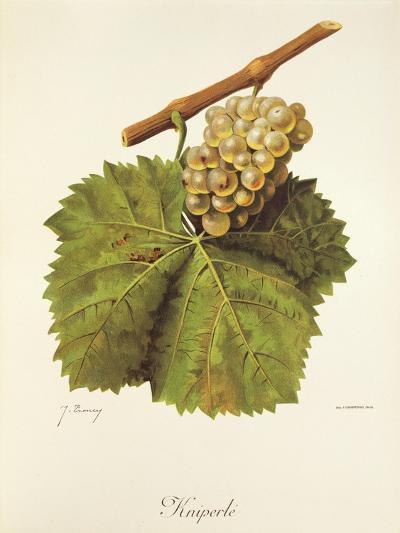 Kniperle Grape-J. Troncy-Giclee Print