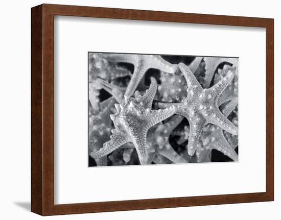 Knobby Starfish, USA-Lisa Engelbrecht-Framed Photographic Print