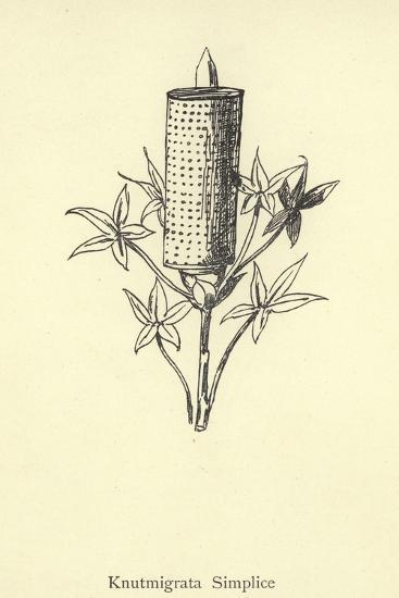Knutmigrata Simplice-Edward Lear-Giclee Print