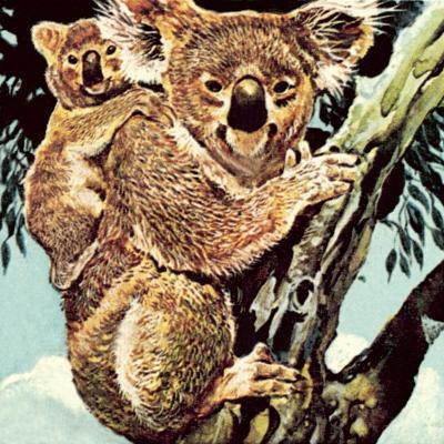Koala Bear-English School-Giclee Print