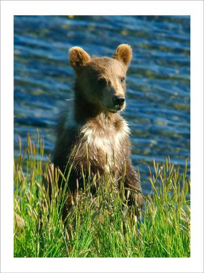 Kodiak Bear Cub-Charles Glover-Giclee Print