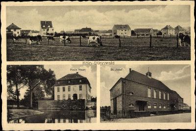 Köln Dünnwald, Haus Haan, St. Josef, Rinderherde Auf Dem Feld--Giclee Print