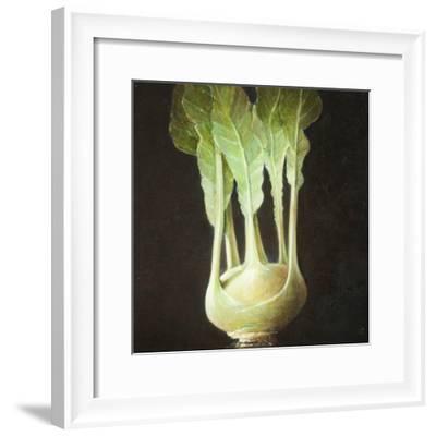 Kohl Rabi, 2012-Lincoln Seligman-Framed Giclee Print