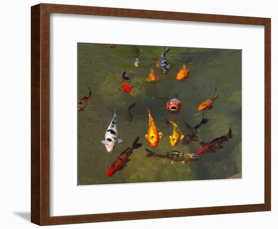 Koi Fish in a Pond-Raul Touzon-Framed Photographic Print