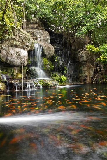 Koi Fish in Pond at the Garden with A Waterfall- luckypic-Photographic Print