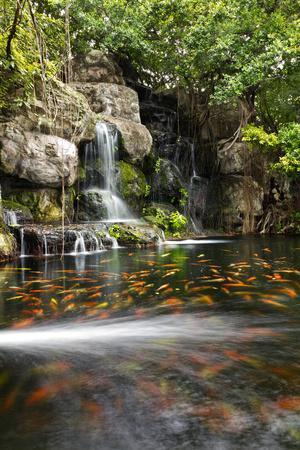 https://imgc.artprintimages.com/img/print/koi-fish-in-pond-at-the-garden-with-a-waterfall_u-l-q1053tc0.jpg?p=0