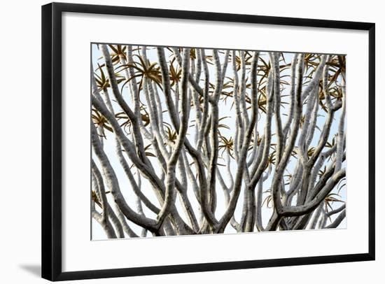 Kokerboom Or Quiver Tree (Aloe Dichotoma) Quiver Tree Forest, Kalahari, Namibia-Enrique Lopez-Tapia-Framed Photographic Print