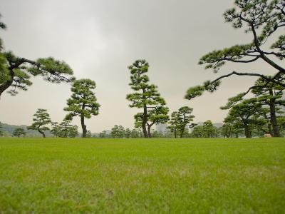 Kokyo-Gaien (Imperial Palace Gardens) Park, Covered with Pine Trees-Merten Snijders-Photographic Print