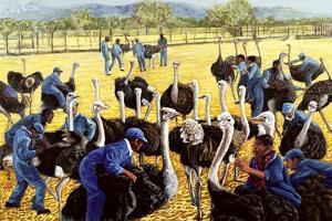 Ostrich Farm, 1988 by Komi Chen