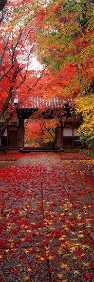 (Komyoji Temple) Kyoto Japan--Photographic Print