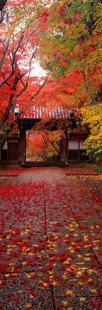 (Komyoji Temple) Kyoto Japan