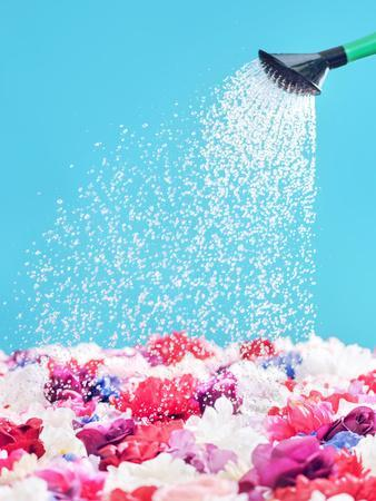 Picture Presenting Watering the Fragrant Flowers
