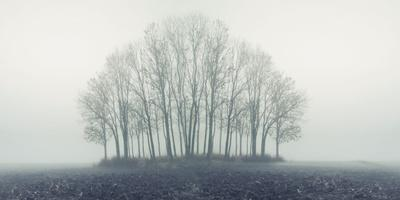 Small Forest in Autumn Foggy Morning
