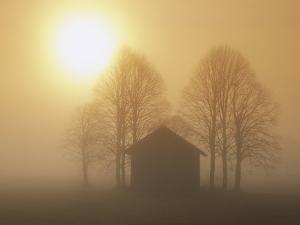 Barn, Trees and Sun Shining Through Morning Mist, Bavaria, Germany by Konrad Wothe