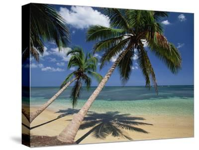 Coconut Palm (Cocos Nucifera) Trees and Beach, Dominican Republic