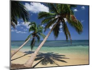 Coconut Palm (Cocos Nucifera) Trees and Beach, Dominican Republic by Konrad Wothe