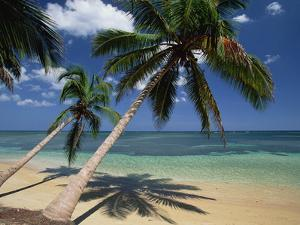 Coconut Palm (Cocos Nucifera) Trees and Beach, Dominican Republic by Konrad Wothe