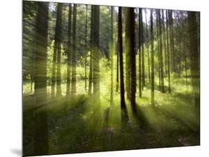 Forest Light Impression, Bavaria, Germany by Konrad Wothe