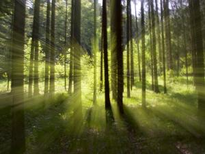 Forest Light Impression, Bavaria, Germany by Konrad Wothe