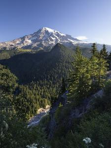Mount Rainier Surrounded by Forest, Washington by Konrad Wothe